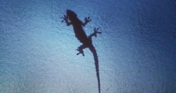 Gecko in Taipei Wohnung